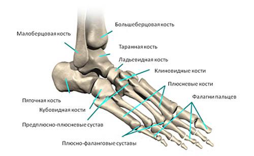 Плюсневые кости стопы и их перелом