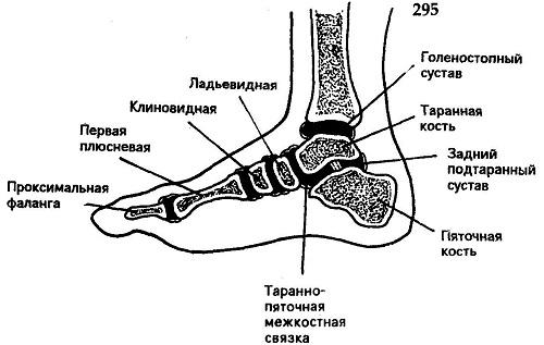 Бодит нога в суставе стопы гимнастика при гонартрозе коленного сустава видео
